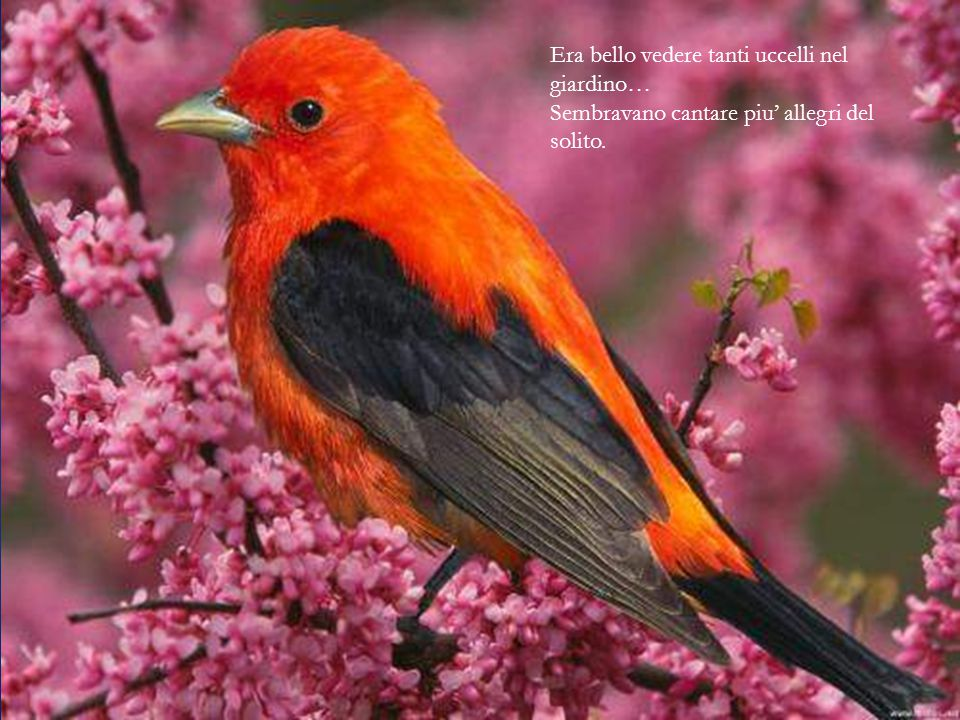 Era bello vedere tanti uccelli nel giardino… Sembravano cantare piu' allegri del solito.