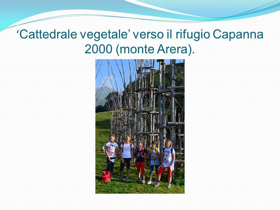 ' Cattedrale vegetale' verso il rifugio Capanna 2000 (monte Arera).