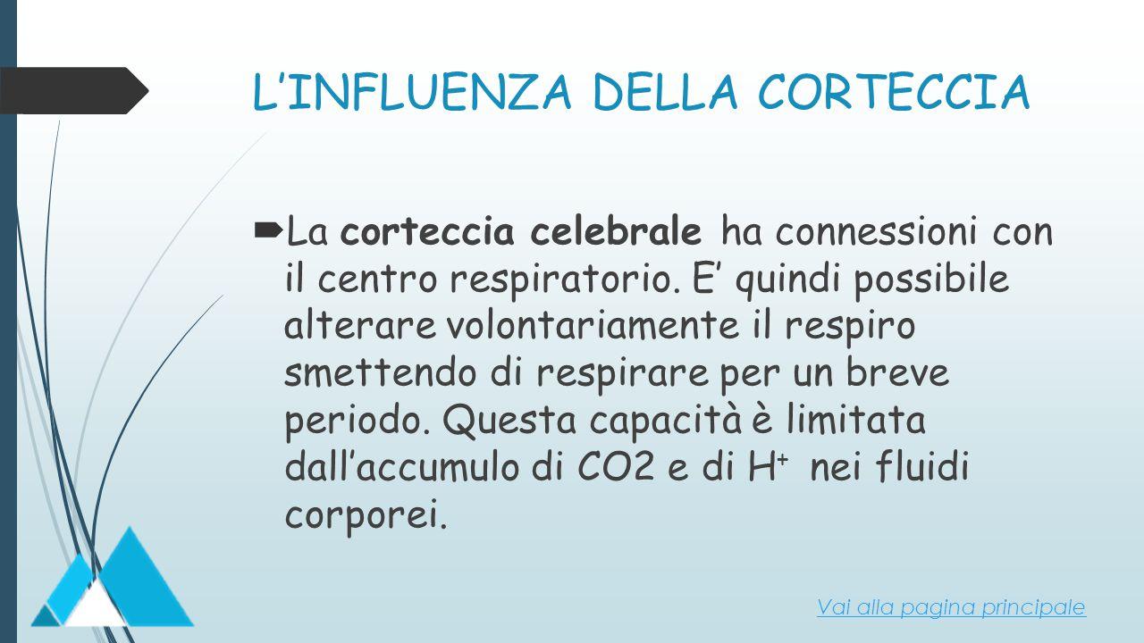 L'INFLUENZA DELLA CORTECCIA  La corteccia celebrale ha connessioni con il centro respiratorio. E' quindi possibile alterare volontariamente il respir