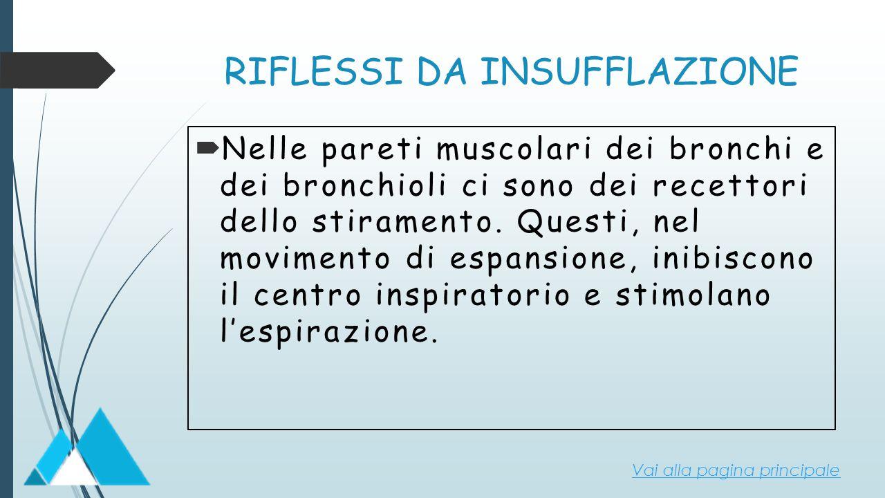 RIFLESSI DA INSUFFLAZIONE  Nelle pareti muscolari dei bronchi e dei bronchioli ci sono dei recettori dello stiramento. Questi, nel movimento di espan