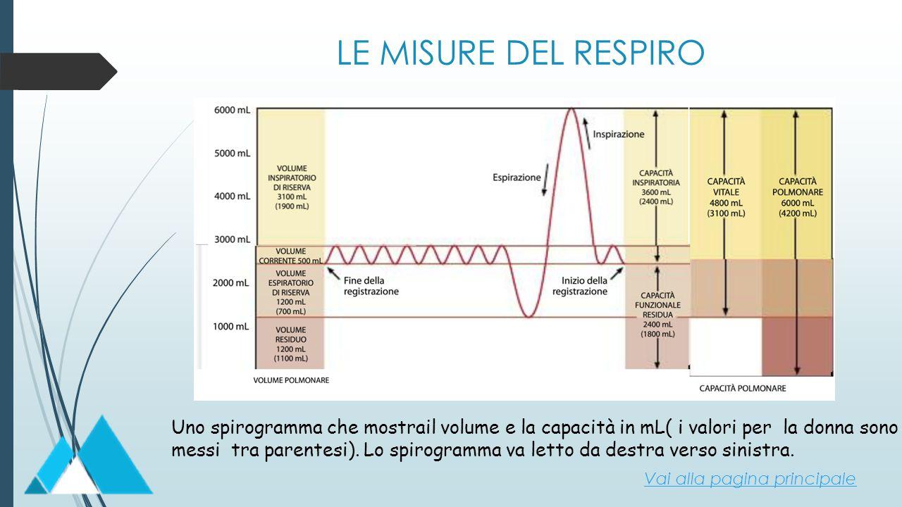 LE MISURE DEL RESPIRO Uno spirogramma che mostrail volume e la capacità in mL( i valori per la donna sono messi tra parentesi). Lo spirogramma va lett