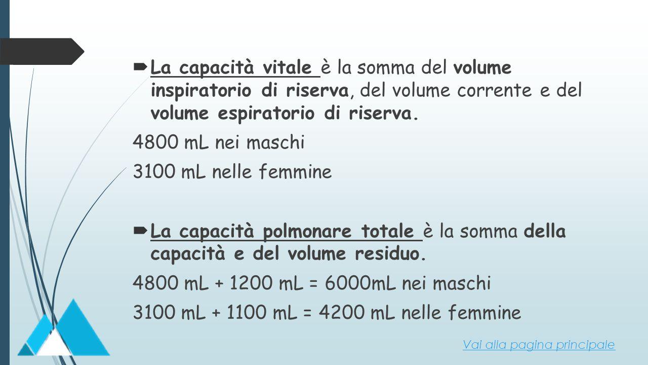  La capacità vitale è la somma del volume inspiratorio di riserva, del volume corrente e del volume espiratorio di riserva. 4800 mL nei maschi 3100 m