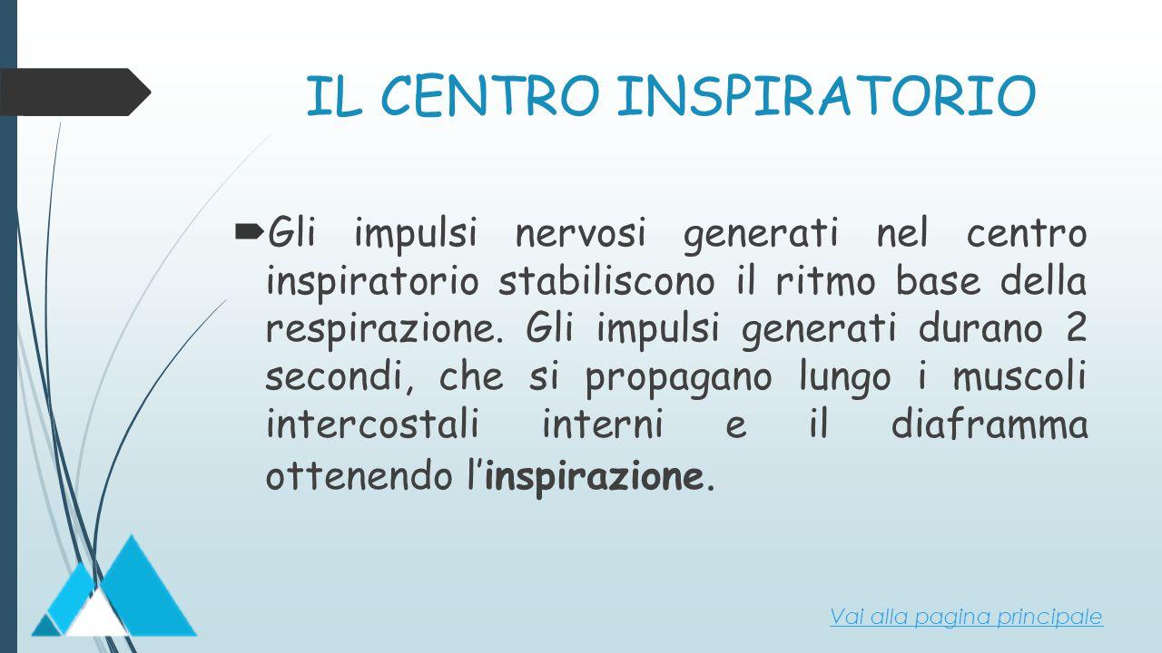 IL CENTRO INSPIRATORIO  Gli impulsi nervosi generati nel centro inspiratorio stabiliscono il ritmo base della respirazione. Gli impulsi generati dura