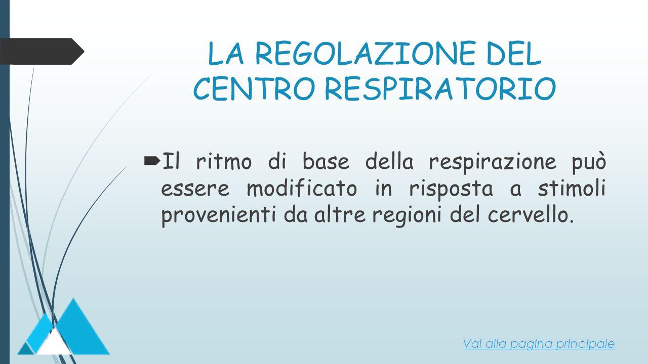 LA REGOLAZIONE DEL CENTRO RESPIRATORIO  Il ritmo di base della respirazione può essere modificato in risposta a stimoli provenienti da altre regioni