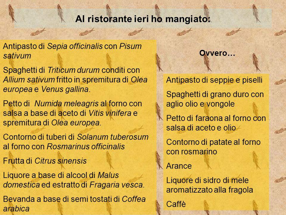 Al ristorante ieri ho mangiato: Antipasto di Sepia officinalis con Pisum sativum Spaghetti di Triticum durum conditi con Allium sativum fritto in spre