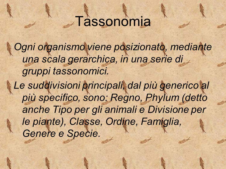 Tassonomia Ogni organismo viene posizionato, mediante una scala gerarchica, in una serie di gruppi tassonomici. Le suddivisioni principali, dal più ge