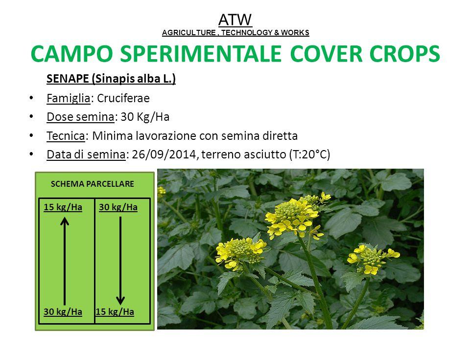 ATW AGRICULTURE, TECHNOLOGY & WORKS CAMPO SPERIMENTALE COVER CROPS SENAPE (Sinapis alba L.) Famiglia: Cruciferae Dose semina: 30 Kg/Ha Tecnica: Minima