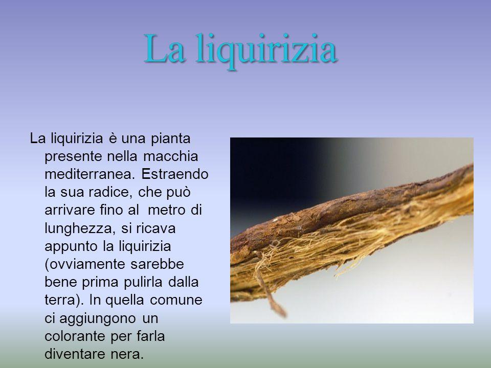 La liquirizia è una pianta presente nella macchia mediterranea.