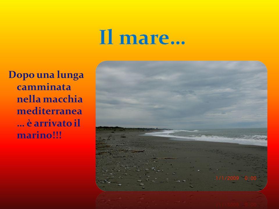 Dopo una lunga camminata nella macchia mediterranea … è arrivato il marino!!!