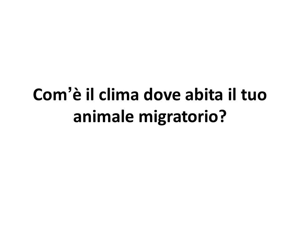 Com'è il clima dove abita il tuo animale migratorio?