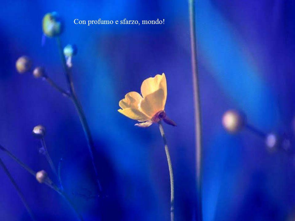 Altri fiori verranno a te,