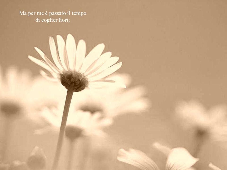 Ma per me è passato il tempo di coglier fiori;