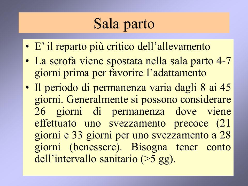 Sala parto E' il reparto più critico dell'allevamento La scrofa viene spostata nella sala parto 4-7 giorni prima per favorire l'adattamento Il periodo