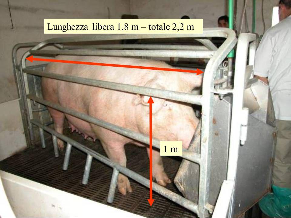 Lunghezza libera 1,8 m – totale 2,2 m 1 m