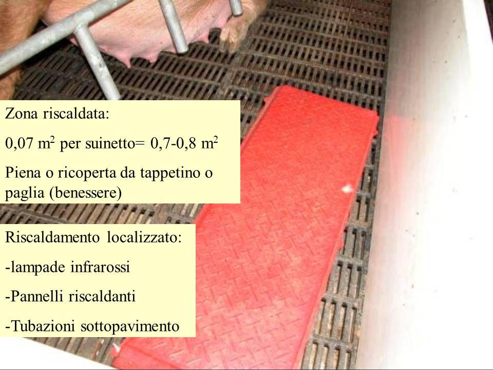 Zona riscaldata: 0,07 m 2 per suinetto= 0,7-0,8 m 2 Piena o ricoperta da tappetino o paglia (benessere) Riscaldamento localizzato: -lampade infrarossi -Pannelli riscaldanti -Tubazioni sottopavimento