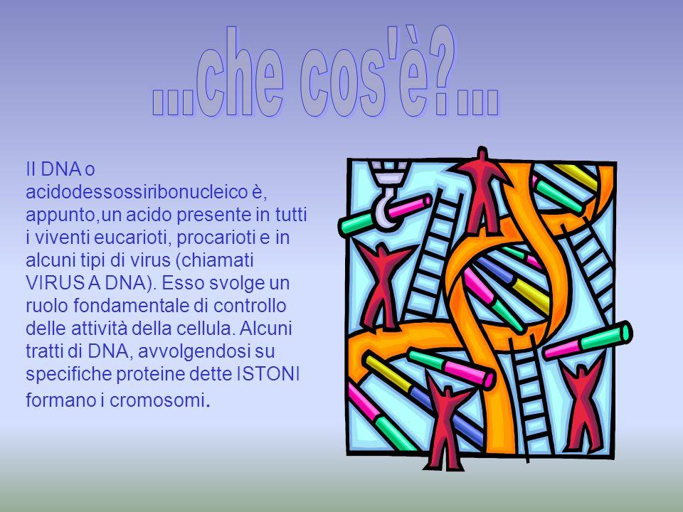 Il DNA oltre a svolgere normalmente la riproduzione cellulare (MITOSI, MEIOSI) si può sintetizzare in un altro acido più semplice : l' RNA.