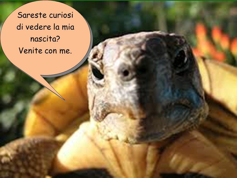 Lo sapevate che noi tartarughe apparteniamo alla famiglia dei rettili .
