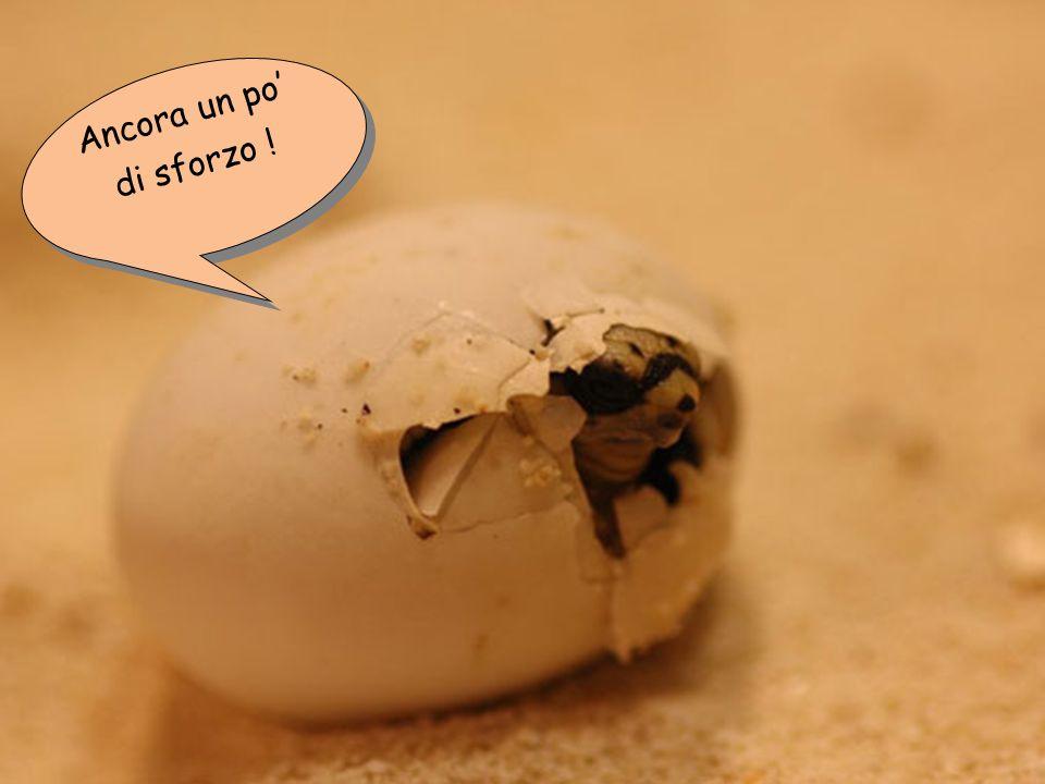 Finalmente ho bucato l'uovo ! Finalmente ho bucato l'uovo !