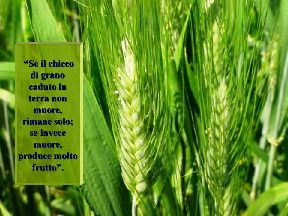 """""""Se il chicco di grano caduto in terra non muore, rimane solo; se invece muore, produce molto frutto""""."""