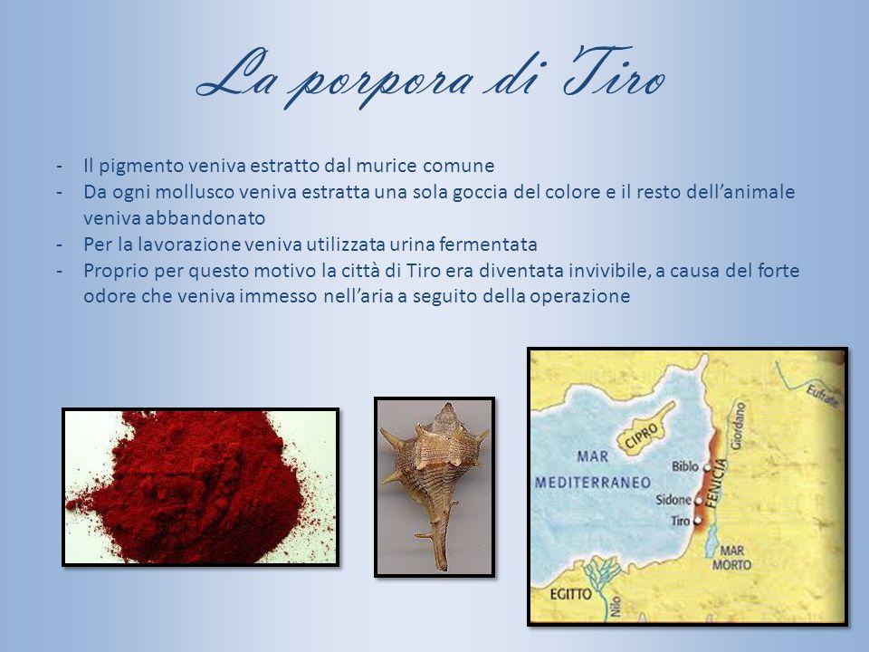 La porpora di Tiro -Il pigmento veniva estratto dal murice comune -Da ogni mollusco veniva estratta una sola goccia del colore e il resto dell'animale