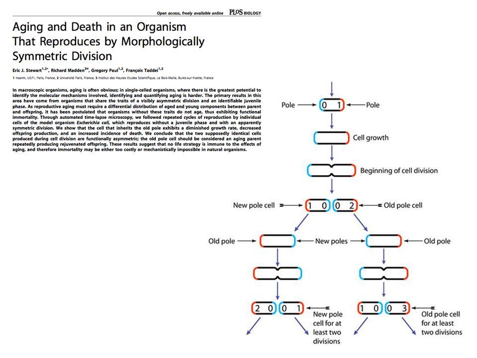 La linea germinale e immortale