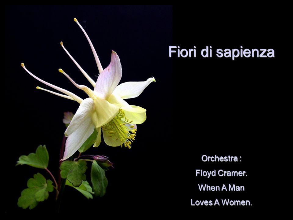 Orchestra : Floyd Cramer. When A Man Loves A Women. Fiori di sapienza