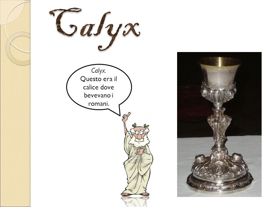 Calyx. Questo era il calice dove bevevano i romani.