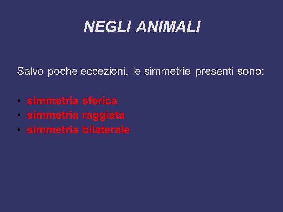 La simmetria predominante è la simmetria bilaterale, in assoluto la più comune, nella quale l'organismo è divisibile in modo simmetrico, o speculare, rispetto a un piano mediano (come avviene anche nell'uomo).