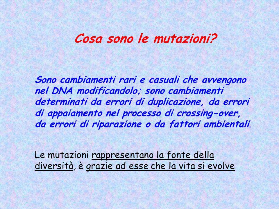 Cosa sono le mutazioni? Sono cambiamenti rari e casuali che avvengono nel DNA modificandolo; sono cambiamenti determinati da errori di duplicazione, d
