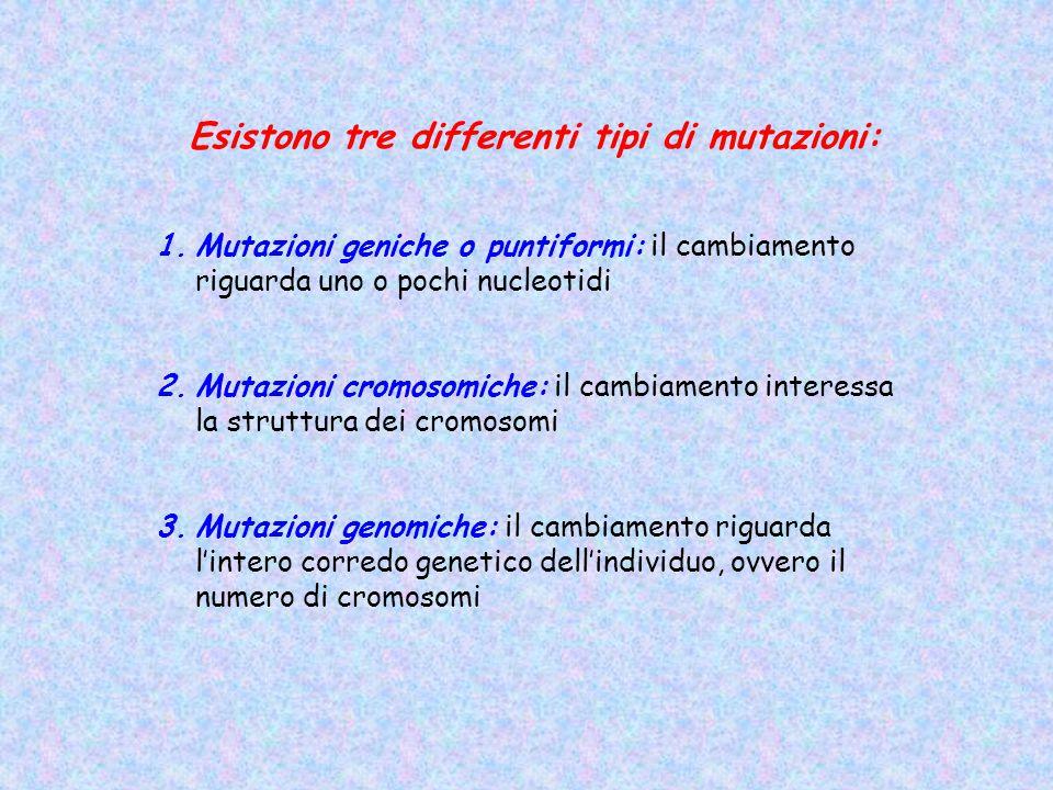 Esistono tre differenti tipi di mutazioni: 1.Mutazioni geniche o puntiformi: il cambiamento riguarda uno o pochi nucleotidi 2.Mutazioni cromosomiche: il cambiamento interessa la struttura dei cromosomi 3.Mutazioni genomiche: il cambiamento riguarda l'intero corredo genetico dell'individuo, ovvero il numero di cromosomi