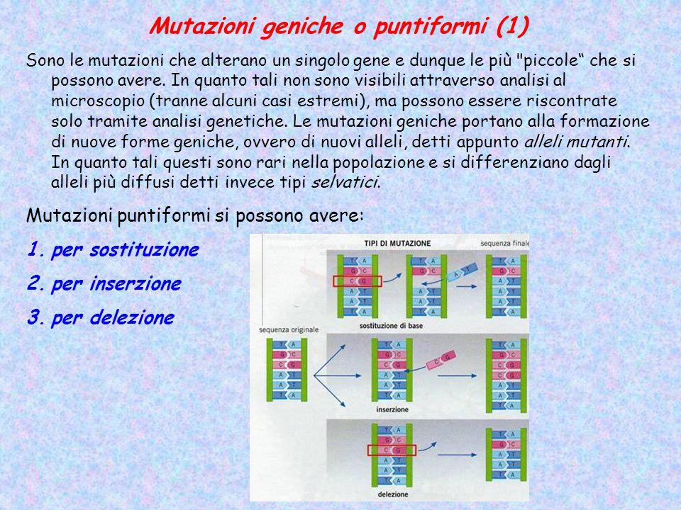 Mutazioni geniche o puntiformi (1) Sono le mutazioni che alterano un singolo gene e dunque le più piccole che si possono avere.