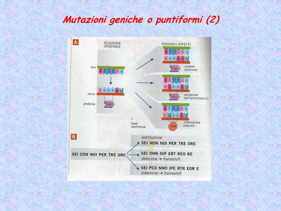 Mutazioni geniche o puntiformi (2)