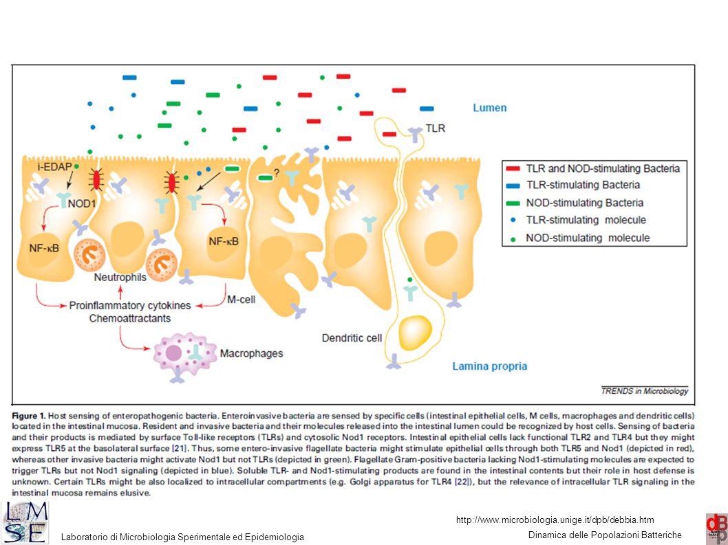 http://www.microbiologia.unige.it/dpb/debbia.htm Dinamica delle Popolazioni Batteriche Laboratorio di Microbiologia Sperimentale ed Epidemiologia 18