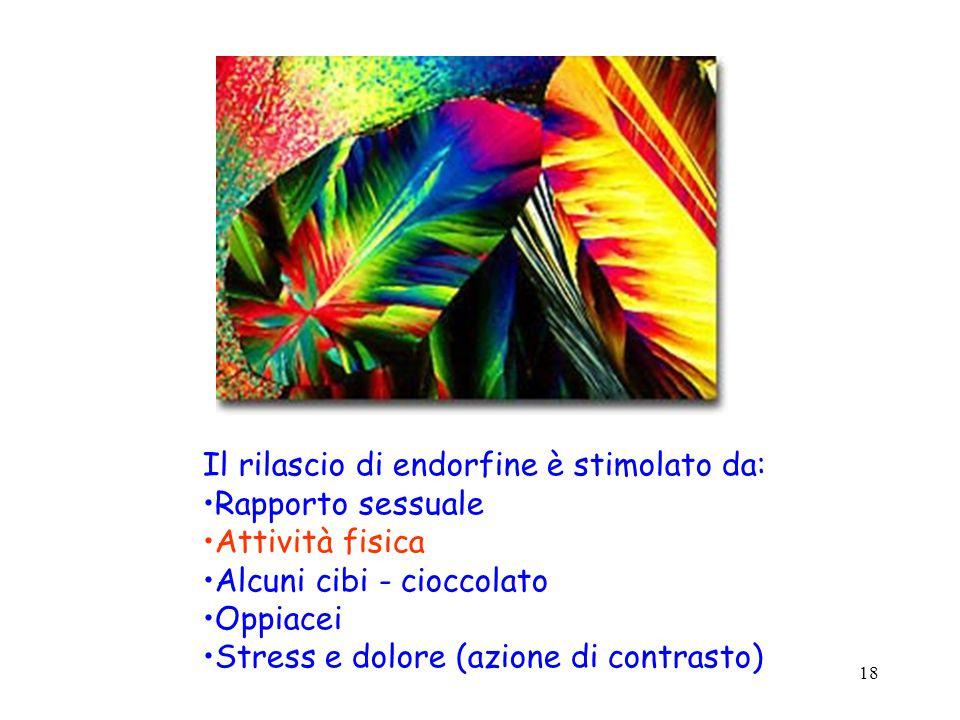 18 Il rilascio di endorfine è stimolato da: Rapporto sessuale Attività fisica Alcuni cibi - cioccolato Oppiacei Stress e dolore (azione di contrasto)
