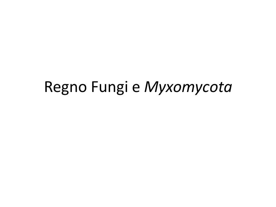 Regno Fungi e Myxomycota