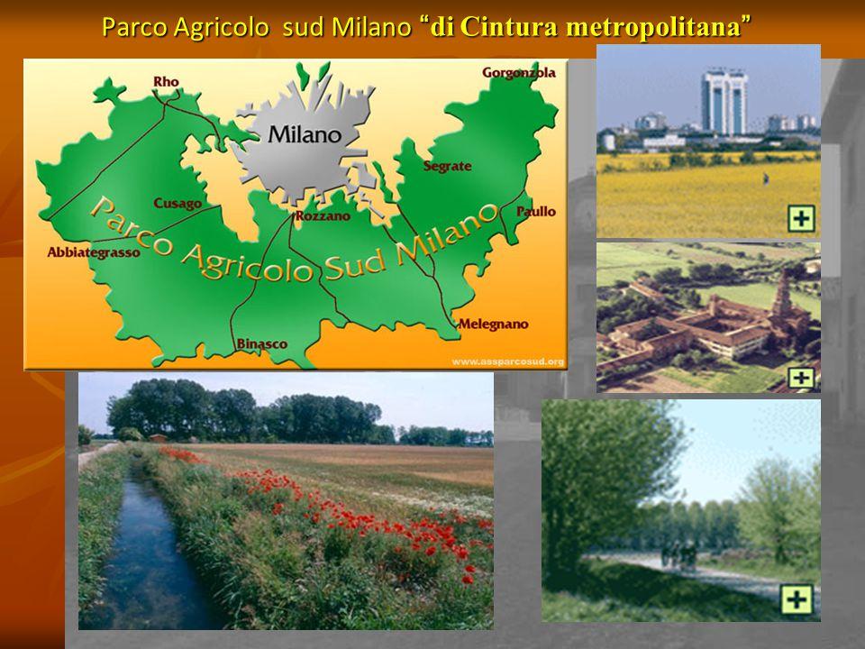 PARCO AGRICOLO MILANO SUD Dimensioni: 46300 ha (50 % territorio metrop.) 39.900 ettari di sup.