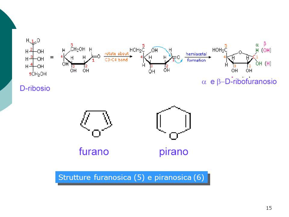 15 Strutture furanosica (5) e piranosica (6)