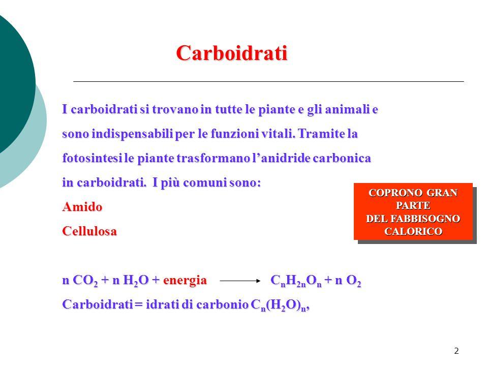 2 I carboidrati si trovano in tutte le piante e gli animali e sono indispensabili per le funzioni vitali. Tramite la fotosintesi le piante trasformano