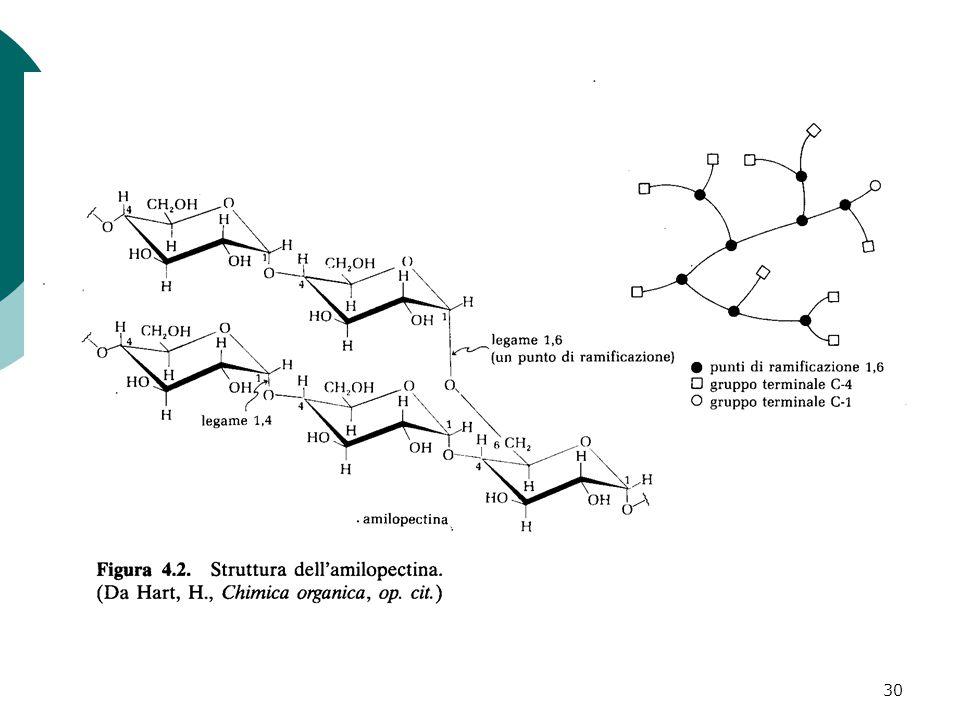 31 parzialmente idrolizzato dall azione delle amilasi l  -amilasi che idrolizza i legami a-1,4- glicosidici ma non è in grado di spezzare i legami  -1,6 dell amilopectina destrina-limite  destrina l  -1,6-glicosidasi L amido viene parzialmente idrolizzato dall azione delle amilasi.