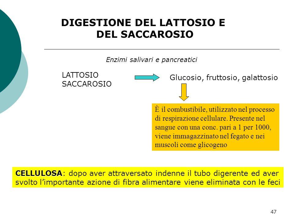 47 DIGESTIONE DEL LATTOSIO E DEL SACCAROSIO LATTOSIO SACCAROSIO Glucosio, fruttosio, galattosio Enzimi salivari e pancreatici È il combustibile, utili