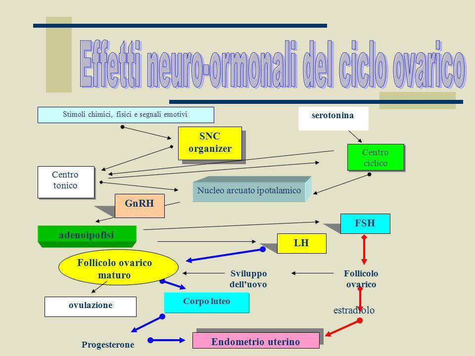 Progesterone Endometrio uterino serotonina Stimoli chimici, fisici e segnali emotivi SNC organizer Centro tonico Centro ciclico Nucleo arcuato ipotala