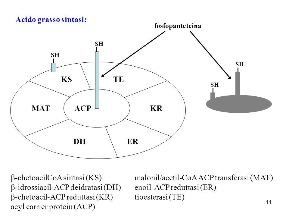 11 Acido grasso sintasi: KS MAT DHER KR TE ACP SH fosfopanteteina β-chetoacilCoA sintasi (KS) malonil/acetil-CoA ACP transferasi (MAT) β-idrossiacil-A