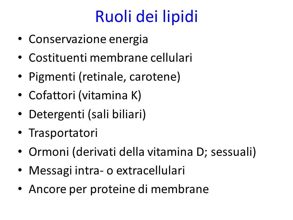 Ruoli dei lipidi Conservazione energia Costituenti membrane cellulari Pigmenti (retinale, carotene) Cofattori (vitamina K) Detergenti (sali biliari) T