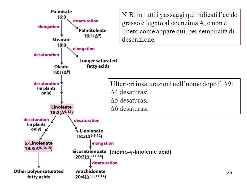 25 (diomo-γ-linolenic acid) Ulteriori insaturazioni nell'uomo dopo il  9:  4 desaturasi  5 desaturasi  6 desaturasi N:B: in tutti i passaggi qui i