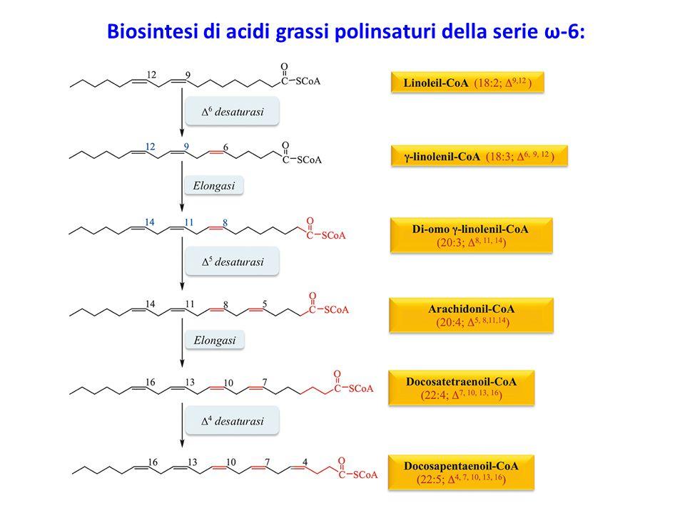 Biosintesi di acidi grassi polinsaturi della serie ω-6: