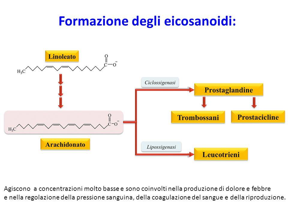 Formazione degli eicosanoidi: Agiscono a concentrazioni molto basse e sono coinvolti nella produzione di dolore e febbre e nella regolazione della pre
