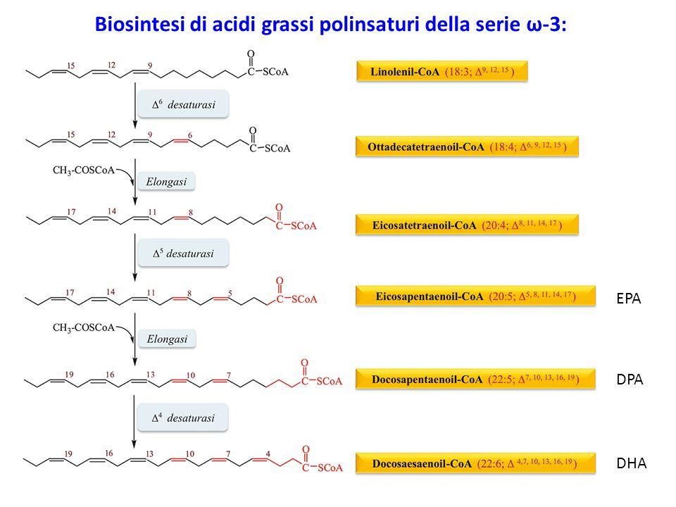 Biosintesi di acidi grassi polinsaturi della serie ω-3: EPA DPA DHA
