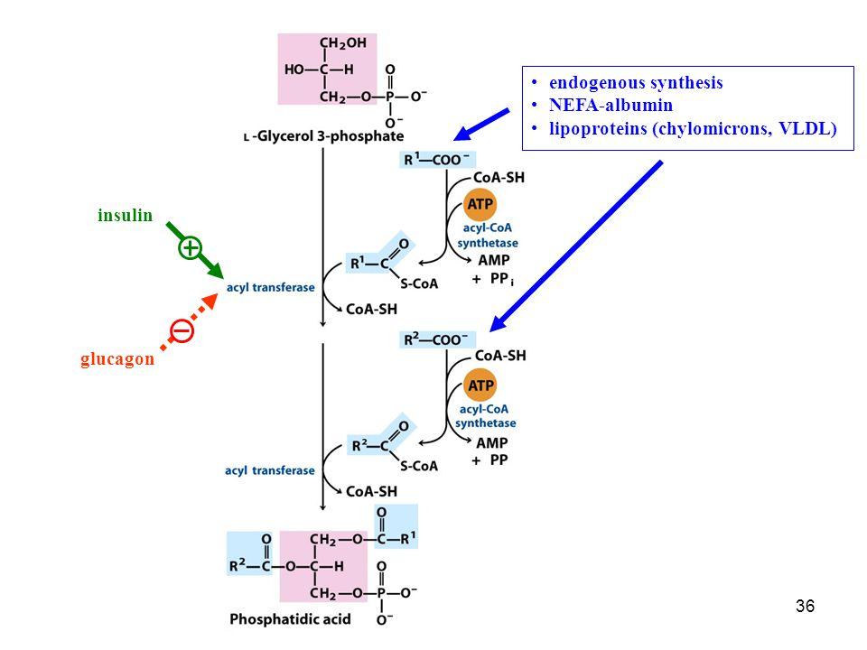 36 endogenous synthesis NEFA-albumin lipoproteins (chylomicrons, VLDL) insulin glucagon
