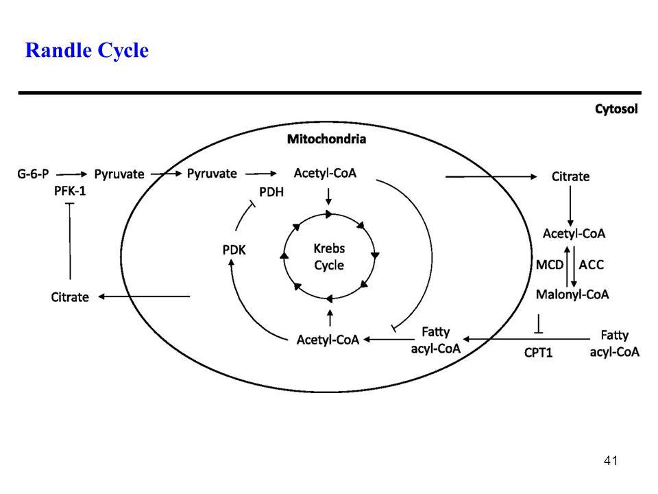 41 Randle Cycle