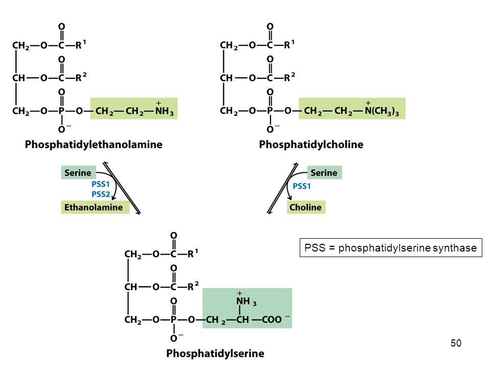 50 PSS = phosphatidylserine synthase
